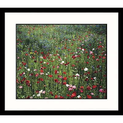 Great American Picture Wildflowers Framed Photograph