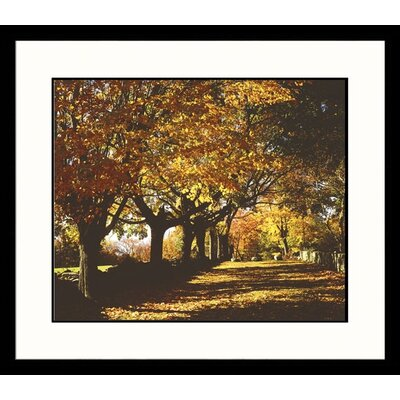 Great American Picture Autumn Path Framed Photograph