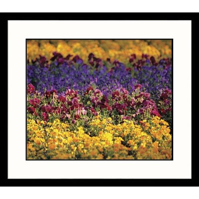 Great American Picture Dancing Flowers Framed Photograph