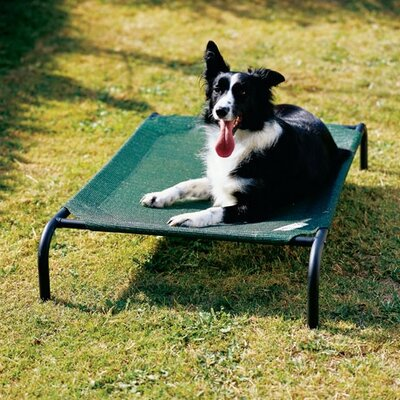Coolaroo Elevated Indoor/Outdoor Dog Cot