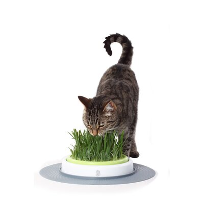 Catit Design Senses Grass Garden for Cats