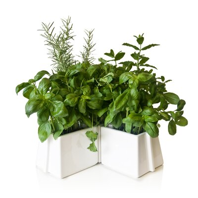 VItamin X-Tray Flower Pot