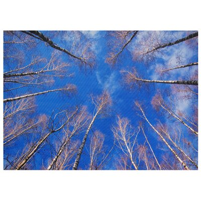 Oriental Furniture Treetops Photographic Print on Canvas