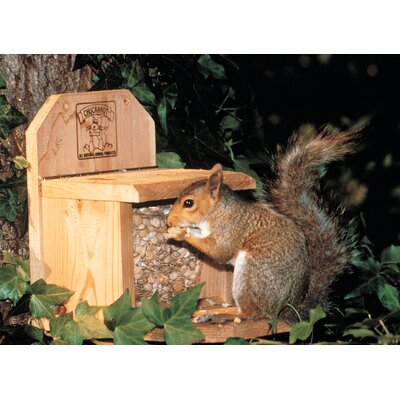 Chuck-A-Nut Products Combo Squirrel Feeder