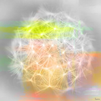 Taraxacum Graphic Art