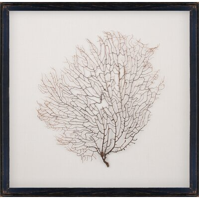 Mirror Image Home Salvaged Sea Fan Art