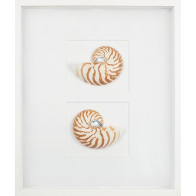 Mirror Image Home Nautilus Shells Graphic Art Shadow Box