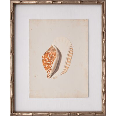 Mini Martini Shell III Framed Graphic Art