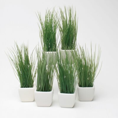 TAG Botanicals Potted Wheat Grass (Set of 6)