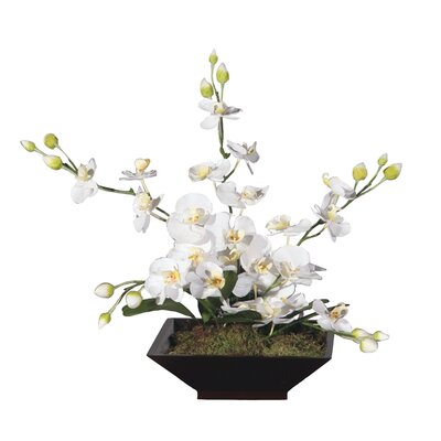 Vickerman Co. Floral Artificial Potted Orchid Square in White and Yellow