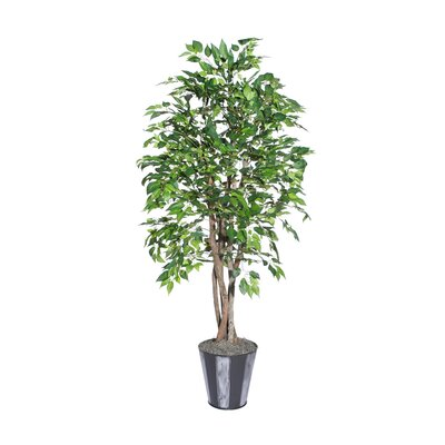 Vickerman Co. Blue Ridge Fir Executive American Elm Tree in Metal Pot