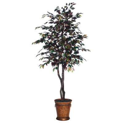 Blue Pencil Mystic Ficus Heartland Tree in Pot
