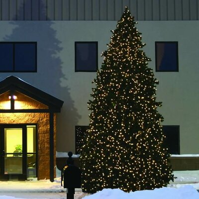 Vickerman Grand Teton 20' Green Commercial Artificial Christmas Tree with 1395 LED Clear C7 ...