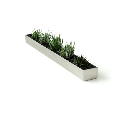 Gus Modern Rectangular Fruit Trough Planter