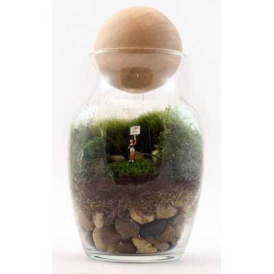 Twig Terrariums Gentle Reminder Desk Top Plant in Terrarium
