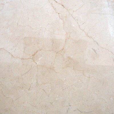 "MS International 12"" x 12"" Polished Marble Tile in Crema Marfil"