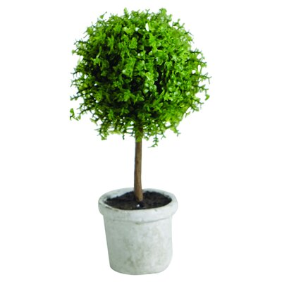 Sage & Co. Baby Tears Ball Topiary Pot