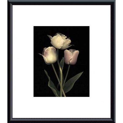 Prelude I by S. Rose Framed Photographic Print