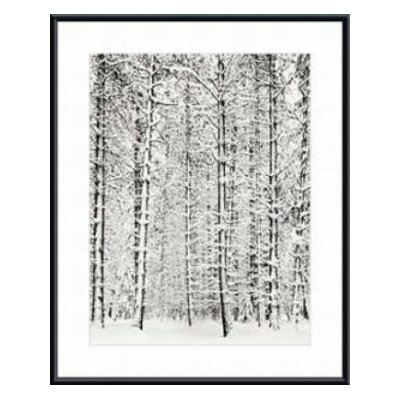 Barewalls Pine Forest in The Snow, Yosemite National Park by Ansel Adams Wood Framed Art Print
