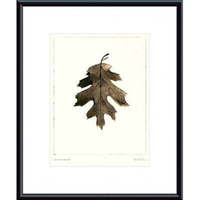 Barewalls California Red Oak Metal Framed Art Print