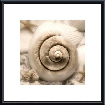 Barewalls Iridescent Seashell I by Donna Geissler Metal Framed Art Print