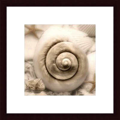 Iridescent Seashell I by Donna Geissler Wood Framed Art Print