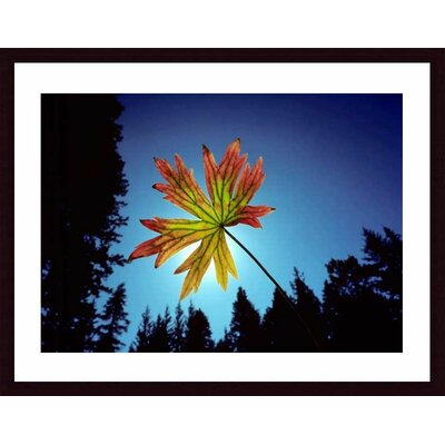 Barewalls Leaf Wood Framed Art Print