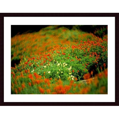 Barewalls White Poppies Wood Framed Art Print