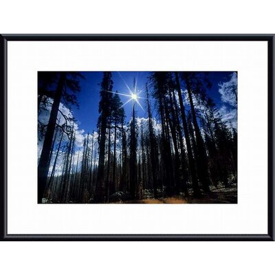 Barewalls Star Bright Metal Framed Art Print