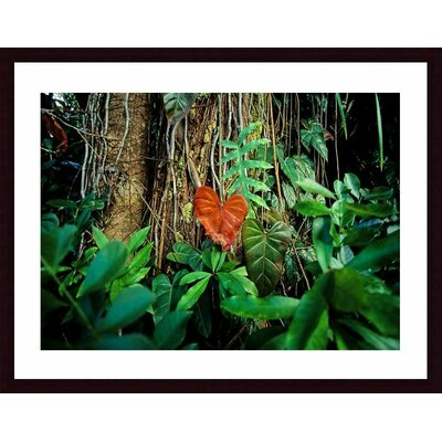 Rain Forest by John K. Nakata Framed Photographic Print