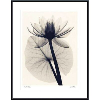 Barewalls Tropical Water Lily Metal Framed Art Print