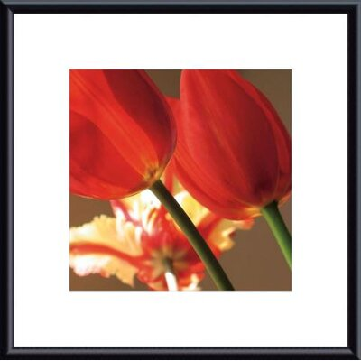 Soiree III by S. Rose Framed Photographic Print