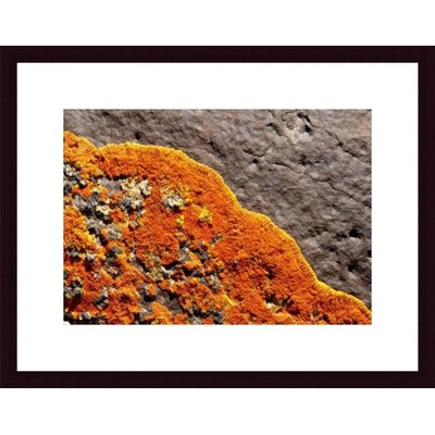 Barewalls Lichen Abstract Wood Framed Art Print