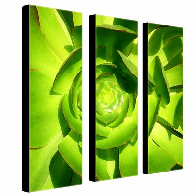 "Trademark Global Succulent Square by Amy Vangsgard, 3 Panel Wall Art - 33"" x 27"""