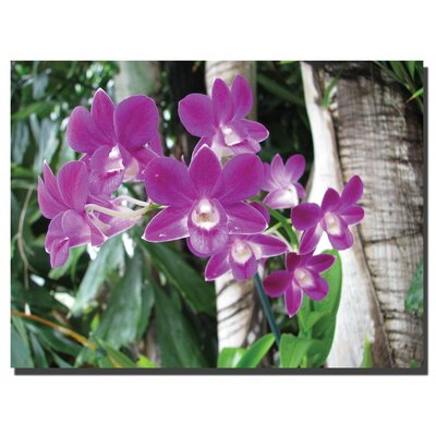 Trademark Global Purple Orchid by David Canvas Art