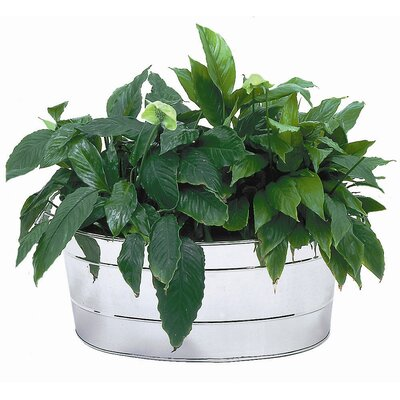 ACHLA Oval Tub Planter