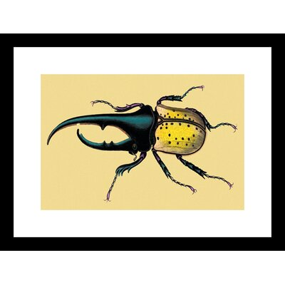 Horned Beetle #2 Framed Graphic Art