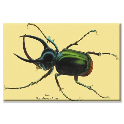 'Beetle Scarabaeus Atlas of Java #2' Graphic Art on Canvas