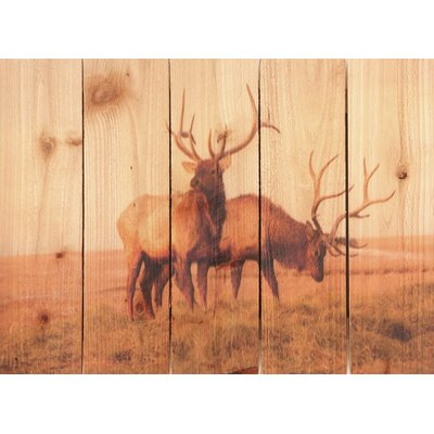Gizaun Art Bull Elk Wall Art