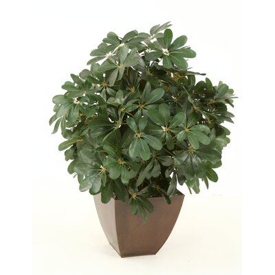 Silk Arboricola Plant in Square Metal Contempo Planter