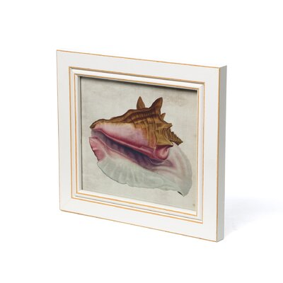 Blueprint Artwork Seashell Framed Art