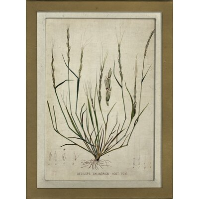 Botanical IV Framed Graphic Art