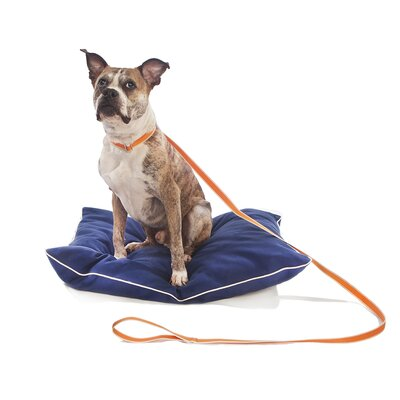 Waggo Stripe Hype Dog Leash