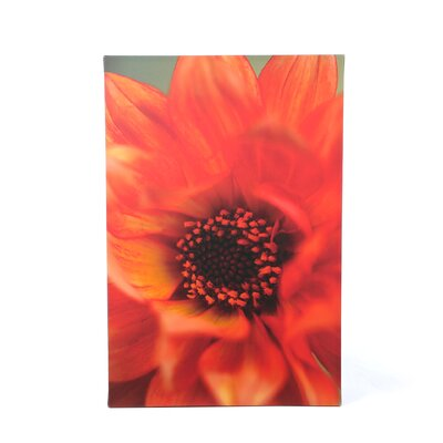 Kathy Yates ''Fiery Dahlia'' Canvas Art