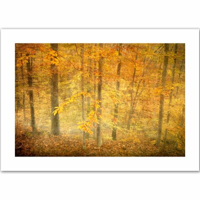 David Liam Kyle 'Lost in Autumn' Unwrapped Canvas Wall Art