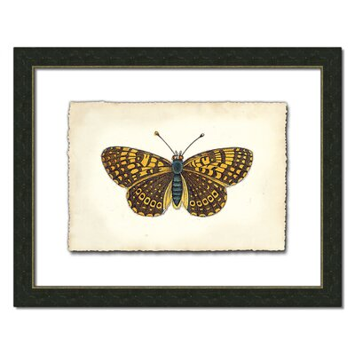 Butterfly Vlll Wall Art
