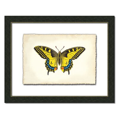 Melissa Van Hise Butterfly Xl Wall Art