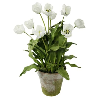 Jane Seymour Botanicals Tulips in Clay Pot