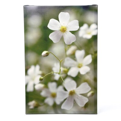 Trademark Fine Art 'Baby's Breath III' by Kurt Shaffer Photographic Print on Canvas