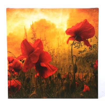 "Trademark Fine Art Red for Love by Philippe Sainte-Laudy, Canvas Art - 24"" x 24"""